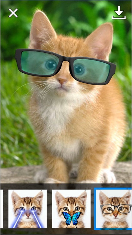 Catify - Cat Effects Camera screenshot-3