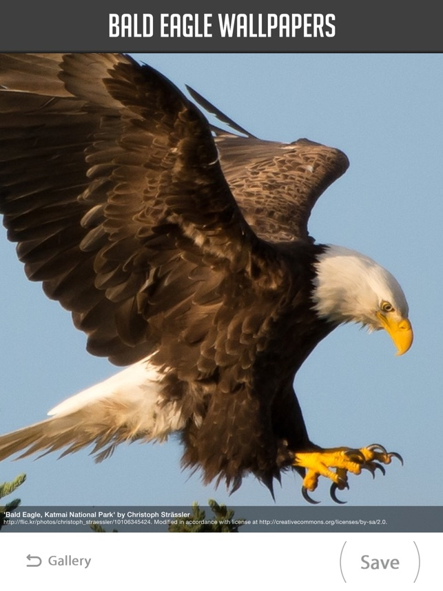 Bald Eagle Wallpapers On The App Store