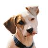 AudioGuía de Entrenamiento Canino Básico
