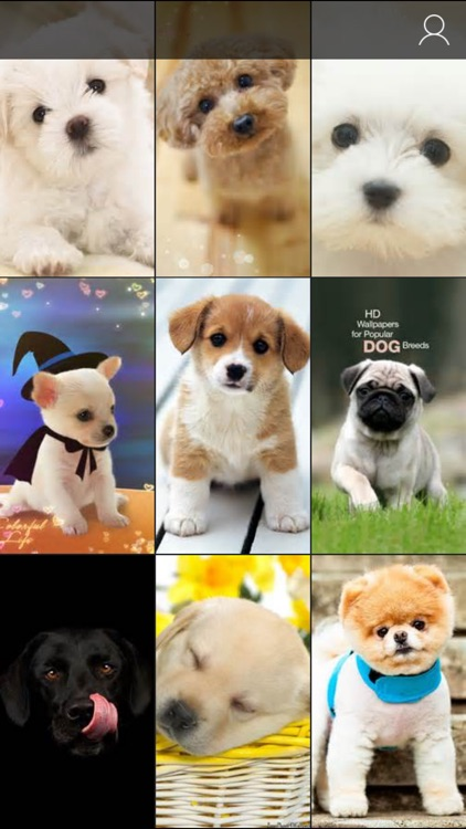 Cute Puppy Wallpapers - Little Dog's Paws Images