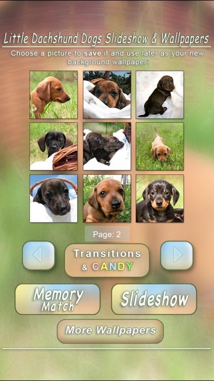 Little Dachshund Dogs - Slideshow & Wallpapers HD screenshot-3