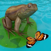 Codes for Frogs Life Hack