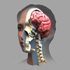 Zygote 3D Anatomy Atlas & Dissection Lab