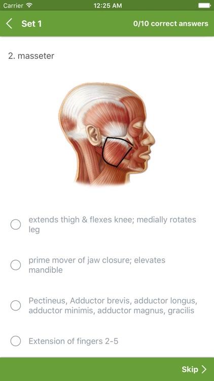 Anatomy Muscles System screenshot-4
