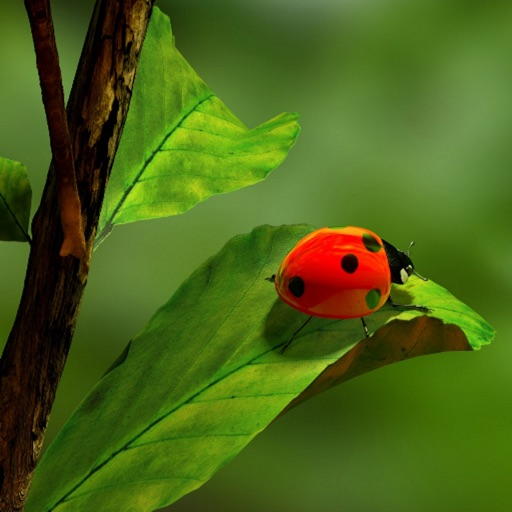 Ladybug Wallpapers icon