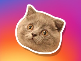Me-ow, these cat stickers are da bomb