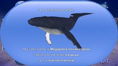 Humpback Whale screenshot four