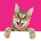 猫ステッカー icon