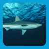 eGuide to Sharks and Rays