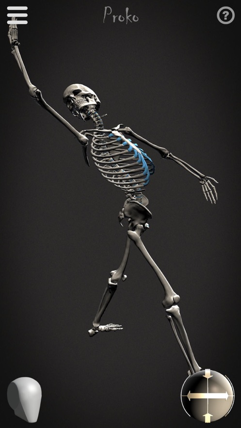 Skelly - Poseable Anatomy Model for Artists App 截图