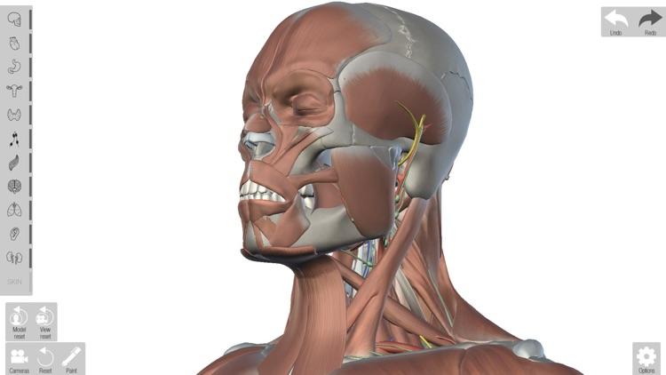 Human Anatomed