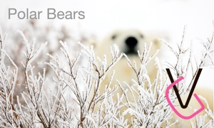 Album Polar Bears HD