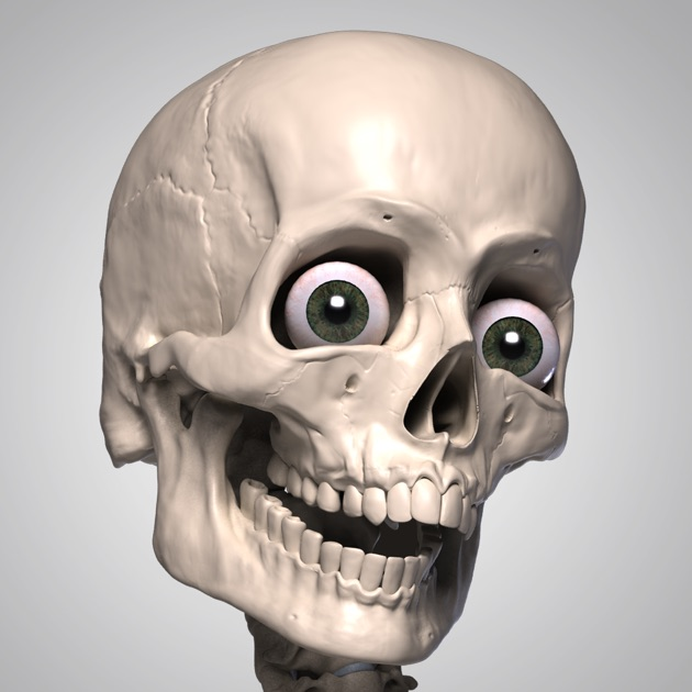 Skelly - Poseable Anatomy Model for Artists on the App Store