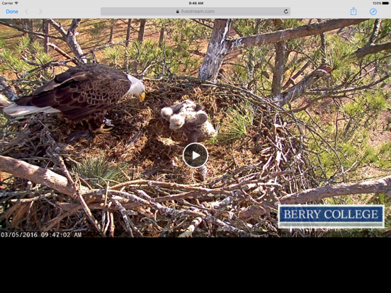 Berry College Eagle Cameras-ipad-1