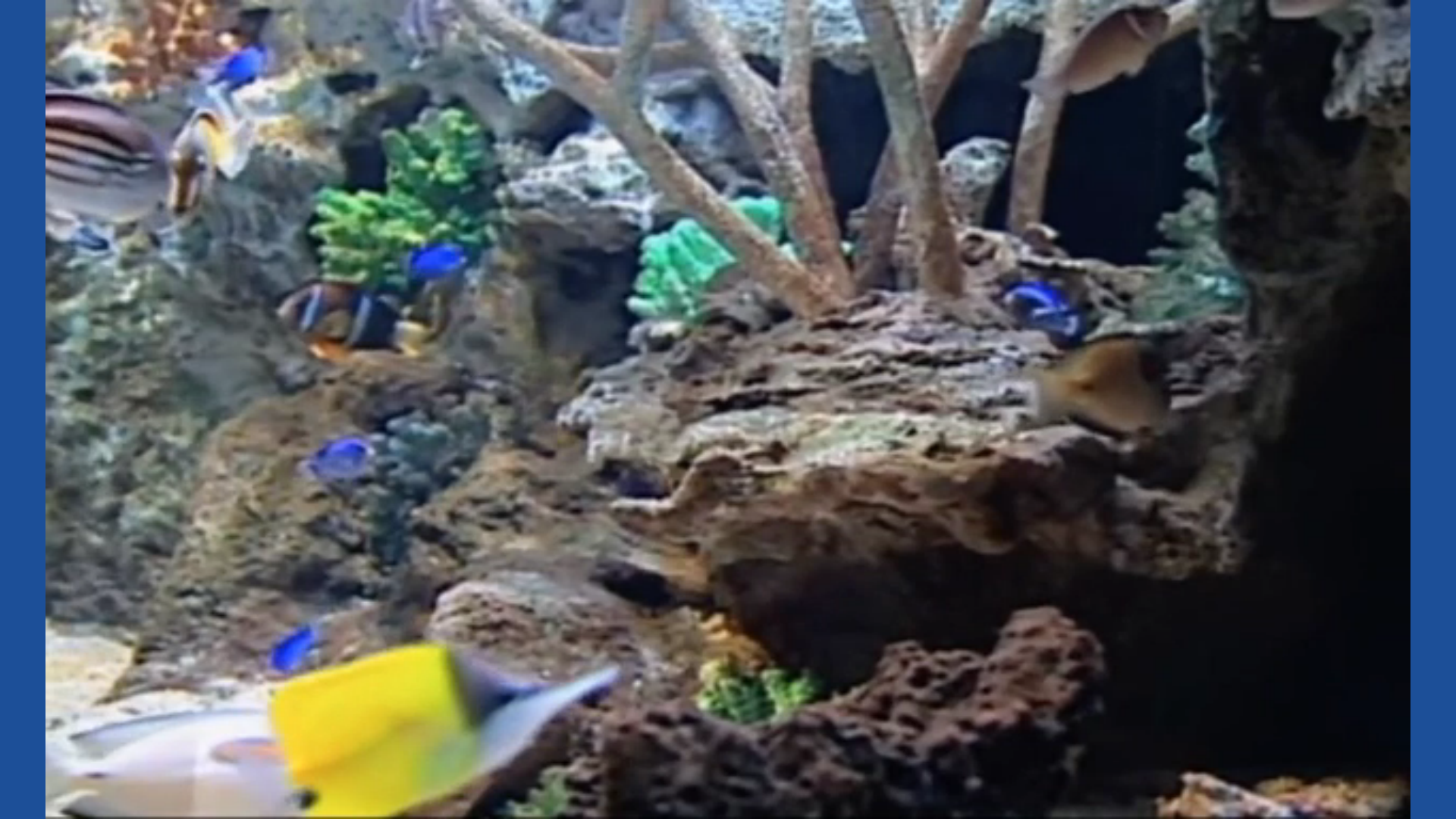Aquarium Fish Tank HD screenshot 3