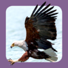 Sasol Algemene Voëls vir Beginners (Volle weergawe): Blitsfeite, foto's en video's van 46 Suider-Afrikaanse voëls
