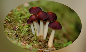 Mushrooms Encyclopedia Pro