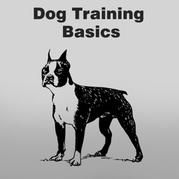 All about Dog Basics Training