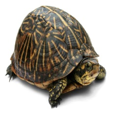 Activities of Ricochet Turtle