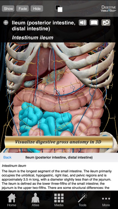 Digestive Anatomy Atlas: Essential Reference for Students and Healthcare Professionalsのおすすめ画像1