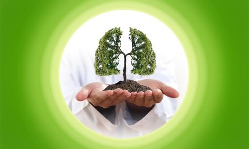 Medicinal Plants Pairs