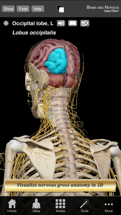 Brain and Nervous Anatomy Atlas: Essential Reference for