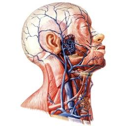 人体生理解剖结构
