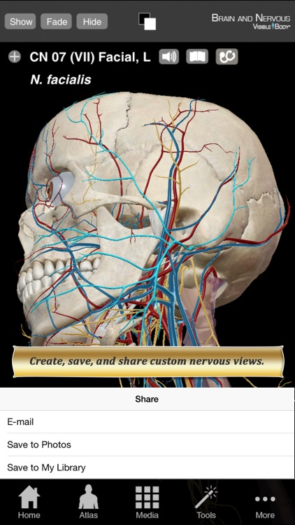 Brain and Nervous Anatomy Atlas: Essential Reference for Students and Healthcare Professionals