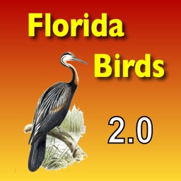 Birds - Common Species of South Florida