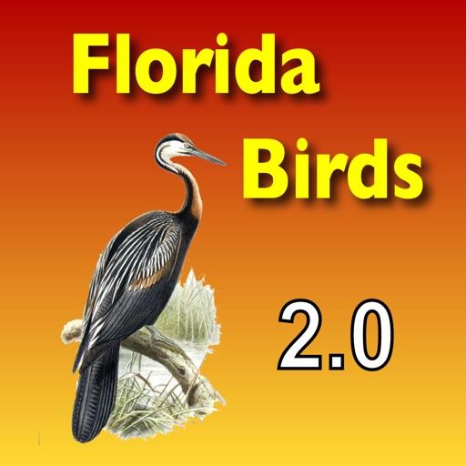 Birds - Common Species of South Florida