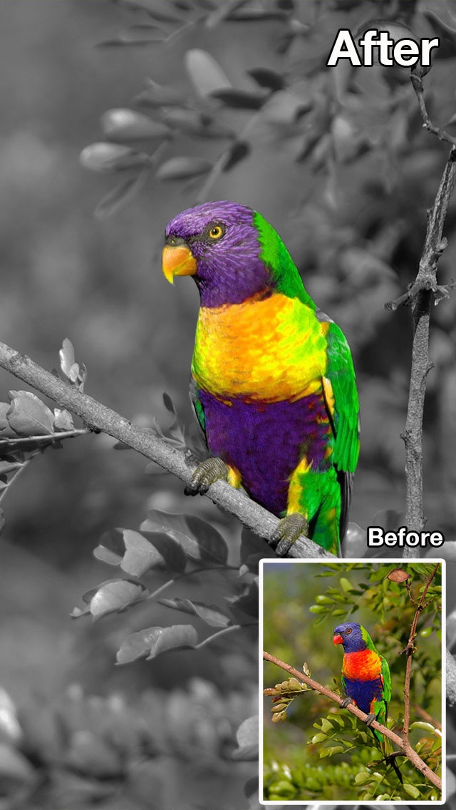 Screenshot #10 for Color Recolor Effects - Photo Splash FX and Paint Highlights into Black & White Pictures