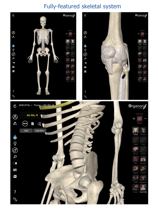 3d Organon Anatomy Skeleton Bones And Ligaments On The App Store