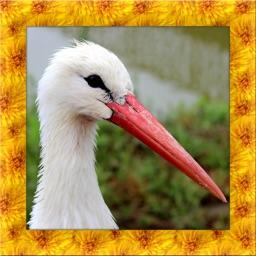 Stork Simulator