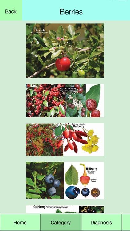 Edible Plant Guide