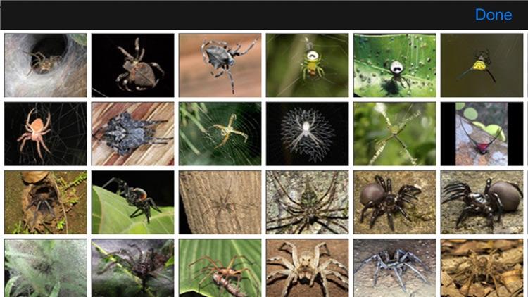 Spiders eGuide screenshot-4