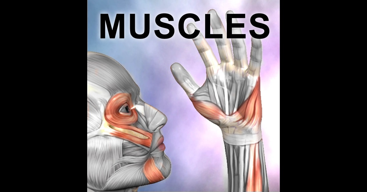 Learn anatomy app