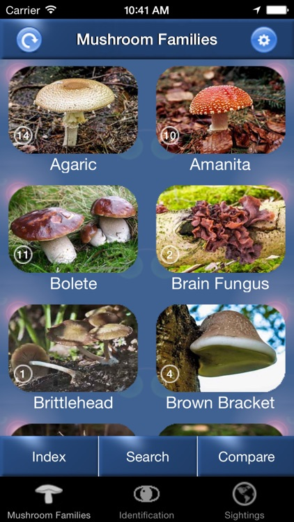 Mushroom Id North America - Fungi Identification Guide to Toadstools and Mushrooms screenshot-0