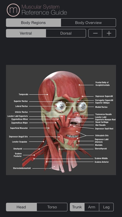 Muscular System Reference Guide screenshot-0