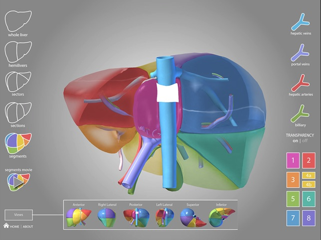 Surgical Anatomy Of The Liver On The App Store