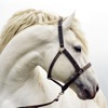 Horse Breeds Guide Reviews