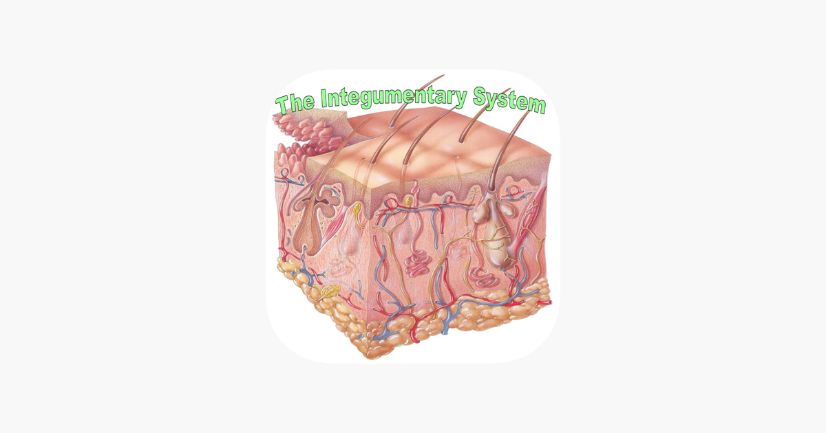 Human Biology Integumentary System Quiz On The App Store