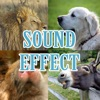 动物音效(哺乳动物哭)