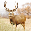 Deer Calls - Hunting Sounds Ringtones and More