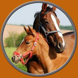 horses pictures to win for kids - free game