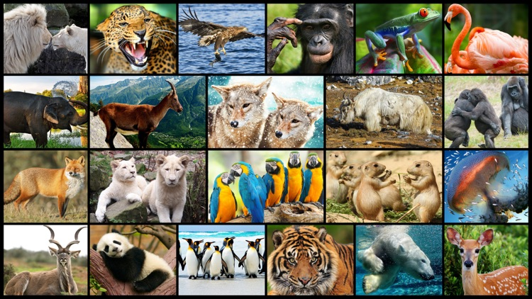 Amazing Wild Animals - Best Animal Picture Puzzle Games for kids