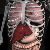 Anatomy 3d app review