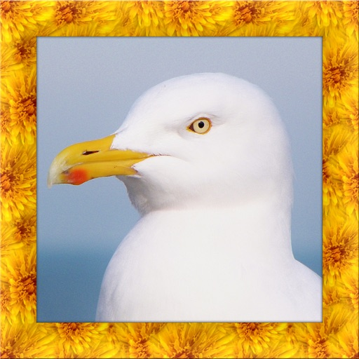 Seagull Bird Simulator