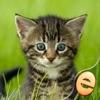 キッズ無料のためのジグソーパズルワンダー子猫のパズル - iPhoneアプリ