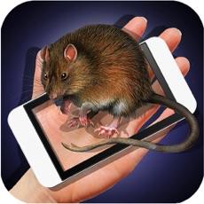 Activities of Rat Hand Funny Joke