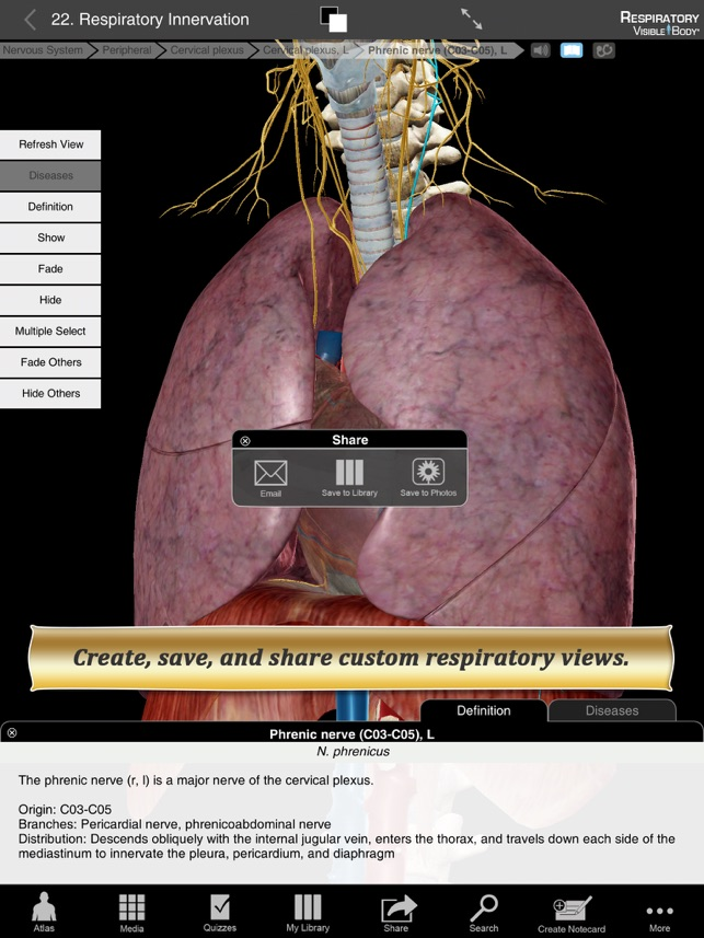 Respiratory Anatomy Atlas: Essential Reference for Students and ...